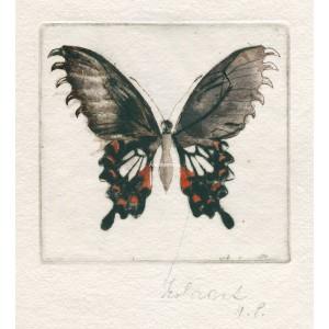 Motýlek dravec