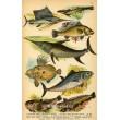 Atlas plazů, obojživelníků a ryb - 30 tabulí