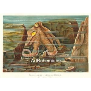 Chobotnice ve svém brlohu číhající (Moře a jeho tvorstvo)