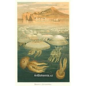 Moře a jeho tvorstvo - komplet 9 grafik