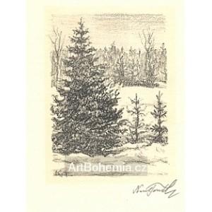 Lesní zákoutí se sněhem