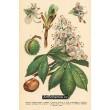 Atlas rostlin 8