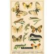 Atlas motýlů 2