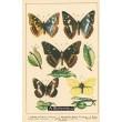 Atlas motýlů 3
