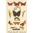 Atlas motýlů 4