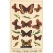 Atlas motýlů 7