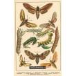 Atlas motýlů 10