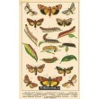 Atlas motýlů 14