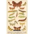 Atlas motýlů 15