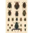 Atlas brouků - komplet 20 tabulí