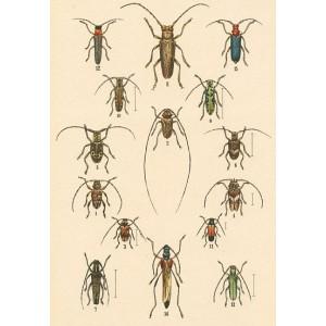 Atlas brouků XVII
