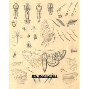 Atlas motýlů střední Evropy, tab.1