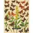 Thecla, Polyommatus, Thestor - Atlas motýlů střední Evropy, tab.6