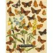 Malitaea, Parthenie, Argynnis - Atlas motýlů střední Evropy, tab.11