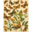 Argynnis - Atlas motýlů střední Evropy, tab.12