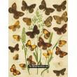 Satyrus, Pararge, Epinephele, Coenon, Triphysa - Atlas motýlů stř.Evropy, tab.15