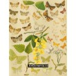 Aventia, Boletobia, Zanclognatha, Bomolocha... -  Atlas motýlů střední Evropy, tab.43