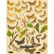 Epione, Hypoplectis, Venilia, Macaria, Biston… - Atlas motýlů střední Evropy, tab.46