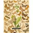 Boarmia, Gnophos, Psodos, Pygmaena, Fidonia… - Atlas motýlů střední Evropy, tab.47