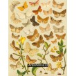 Scodiona, Cleogene, Scoria, Aspilates, Aplasta… - Atlas motýlů střední Evropy, tab.48