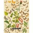 Cidaria, Collix, Eupithecia - Atlas motýlů střední Evropy, tab.50