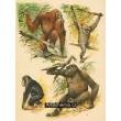 Atlas ssavců - komplet 30 grafik