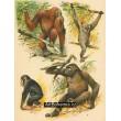 Atlas ssavců I