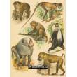 Atlas ssavců II