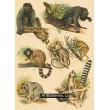 Atlas ssavců III