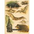 Atlas ssavců IV