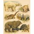 Atlas ssavců V