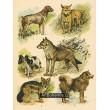 Atlas ssavců VII