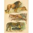 Atlas ssavců IX