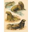 Atlas ssavců XI