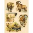Atlas ssavců XX