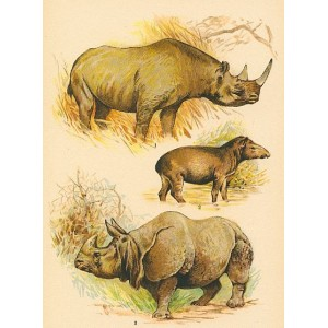 Atlas ssavců XXVI