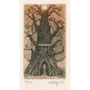 Starý strom - EXL Herbert Kisza
