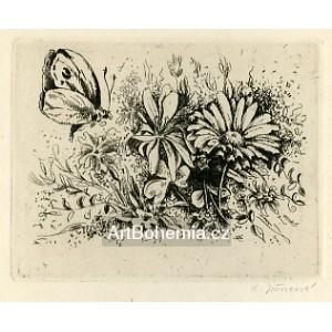 Motýl nad polními květinami, opus 13a