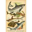 Atlas plazů, obojživelníků a ryb XIV