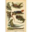Atlas plazů, obojživelníků a ryb XVI