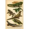 Atlas plazů, obojživelníků a ryb XVII