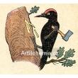 Datel-drvoštěp (Veselý přírodopis)