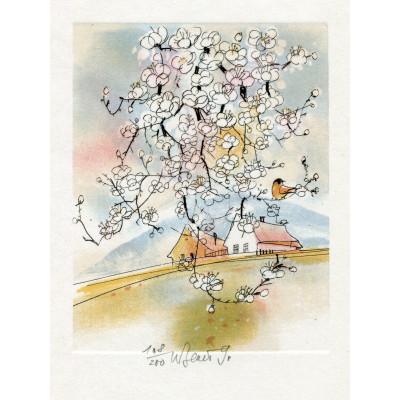 Ptáček na rozkvetlé jabloni