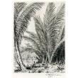 Palmový háj na Ceylonu