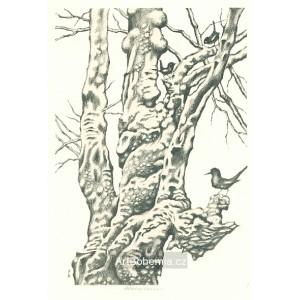 Starý strom s ptáčkem