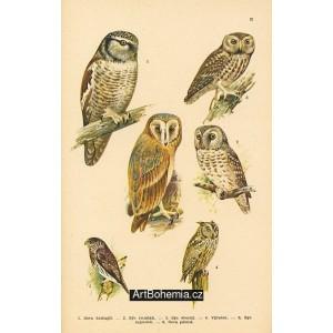 Atlas ptáků III