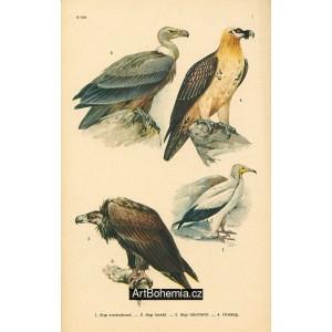 Atlas ptáků I