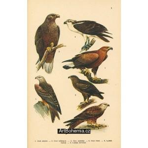Atlas ptáků II - komplet 25 tabulí s 161 obrazy