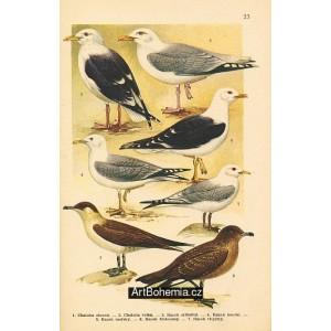 Atlas ptáků 23