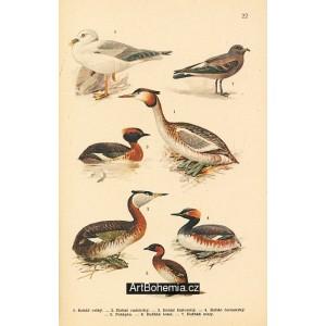 Atlas ptáků 22